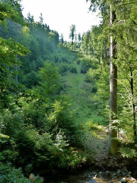 Branná - Svah nad Klepáčským potokem