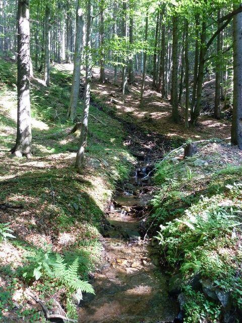 Branná - jeden z mnoha přítoků Klepáčského potoka