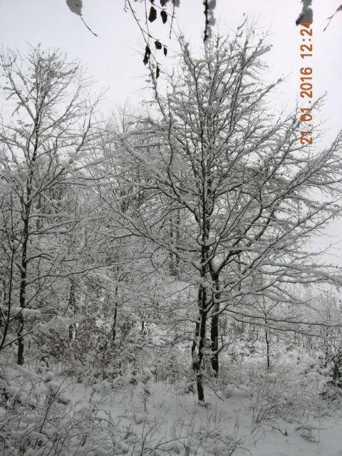 zima v Jizerských horách