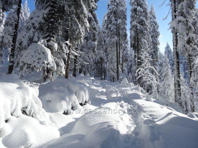 Z Harrachova-z Krakonošovy snídaně-ke Čtyřem pánům 17.1.2016