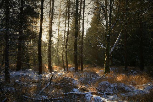 Les pod Jedlovou horou