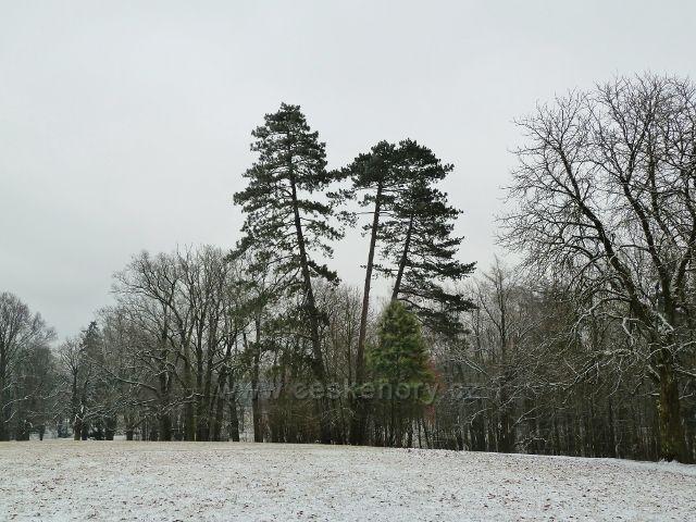 Žamberk - zámecký park, tři grácie v zimě