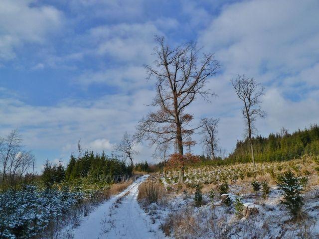 Žamberk - cesta parkem od hájovny k rybníku