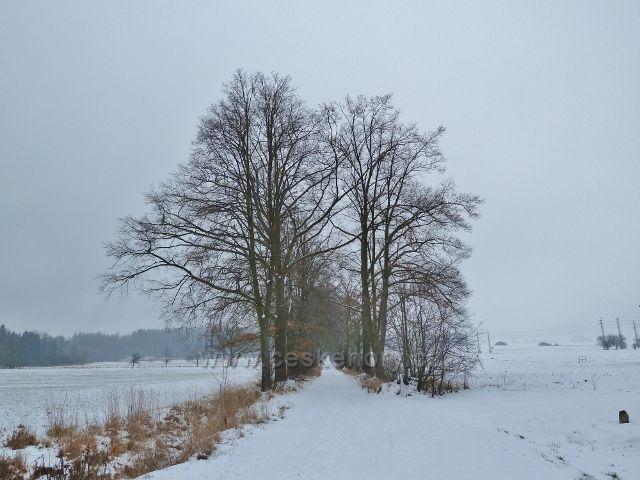 Žamberk - zimní alej na konci parku