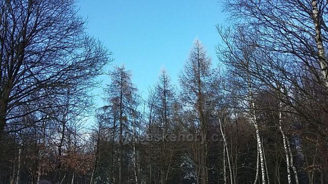 Krásná zima.