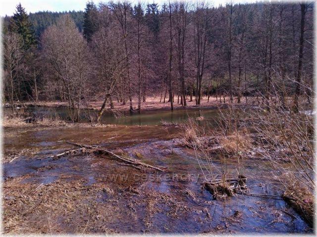 práce bobra na řece Krupa