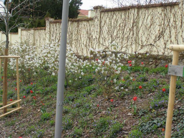Jaro ve Znojmě