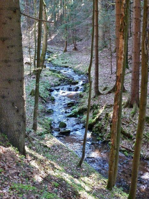 Těchonínský potok v Uhelném dolu