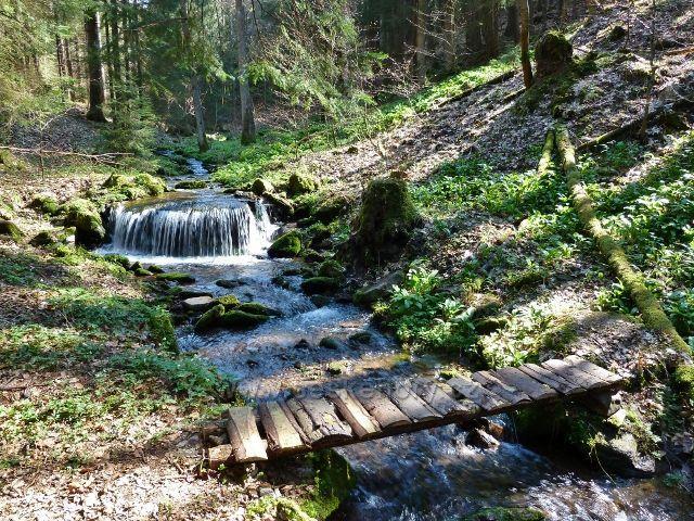 Těchonínský potok v Uhlířském dolu