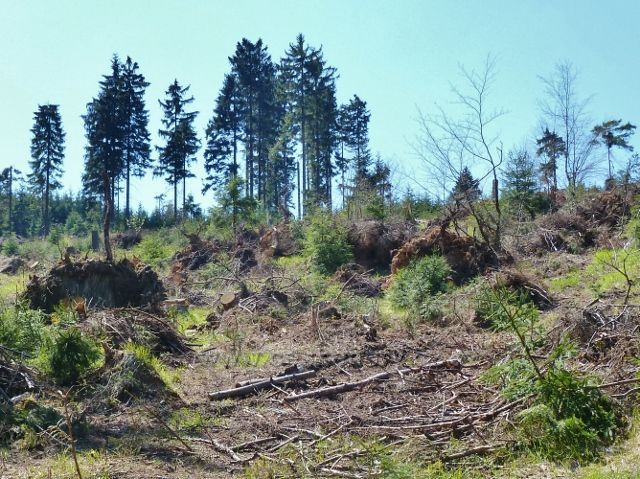 Následky větrné kalamity nad Lichkovem