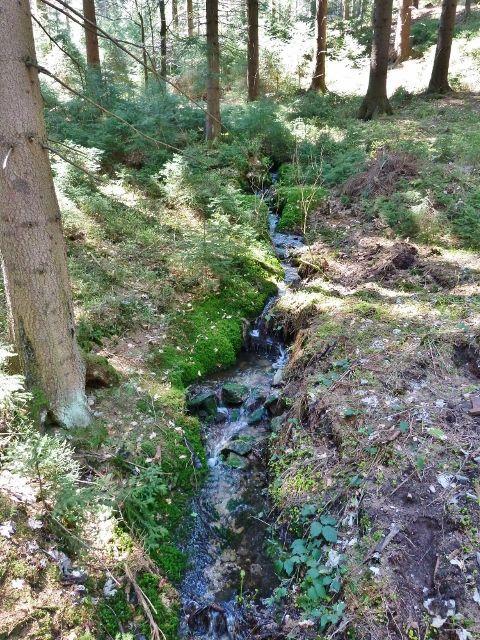Jedna ze zdrojnic Lichkovského potoka