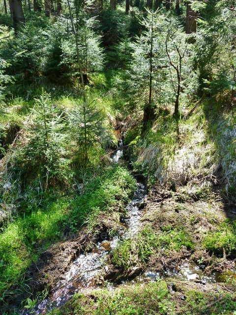 Další z mnoha zdrojnic Lichkovského potoka
