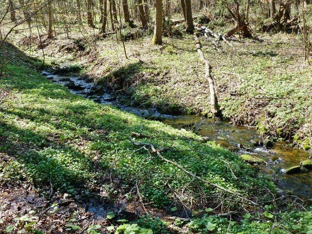 Horní tok Lichkovského potoka