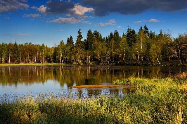 Starý rybník u Výsluní