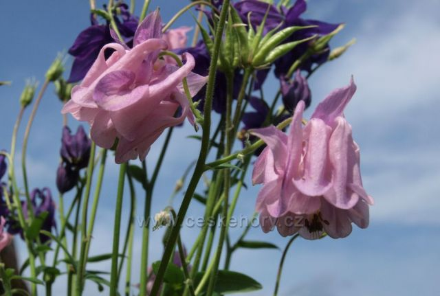 Podhoská květena