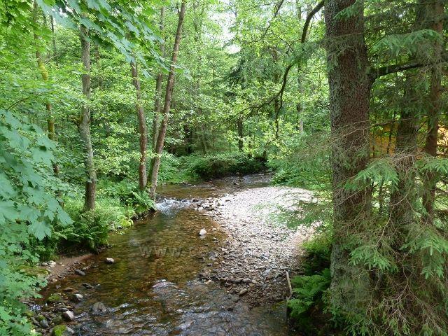 Hamernice - Říčka u letního tábora