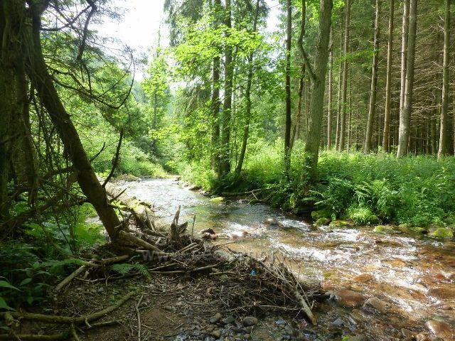 Hamernice - Říčka pod letním táborem