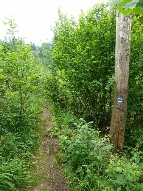 Hamernice - pohodlná cesta se pod letním táborem mění v lesní stezku