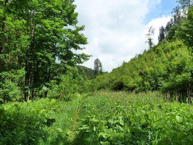 Hamernice - turistická stezka dolní částí údolí vede bujnou vegetací