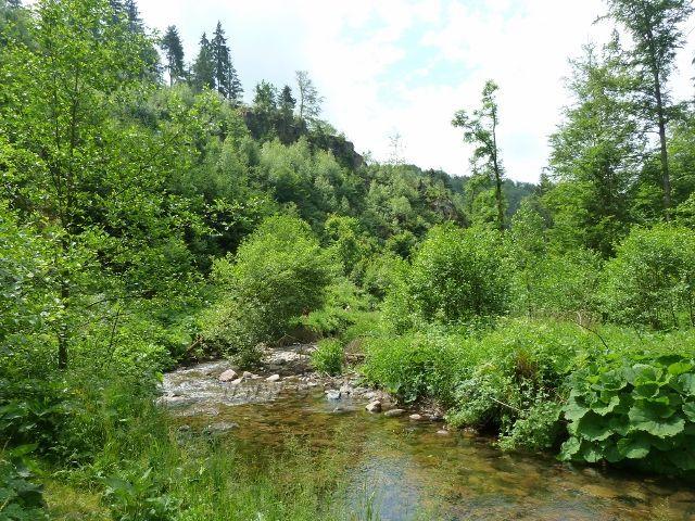 Hamernice - bujnou vegetací protéká i Říčka