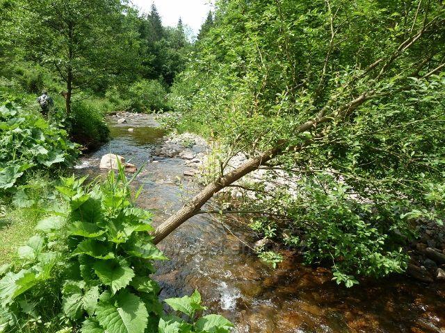 Hamernice - bohaté bylinné patro na březích Říčky