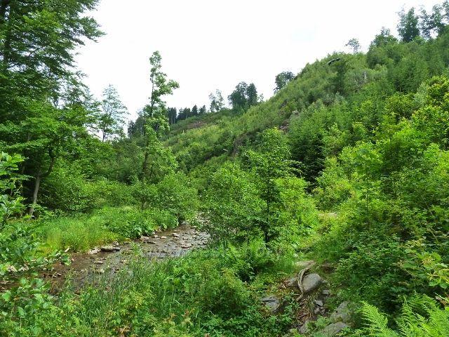 Hamernice -údolí nad soutokem Říčky a Zdobnice se začíná zužovat