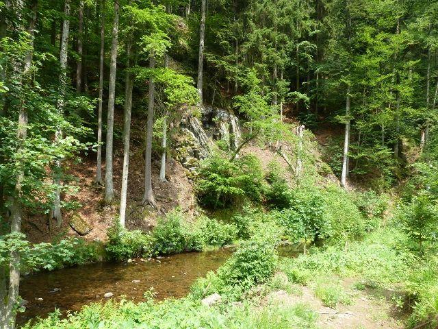 Hamernice - Říčka cca 50 m před soutokem se Zdobnicí