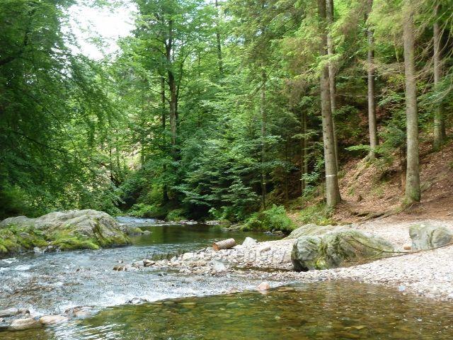 Zdobnice posílena o vody Říčky pokračuje malebným údolím k Pěčínu a ke Slatině n.Zdobnicí
