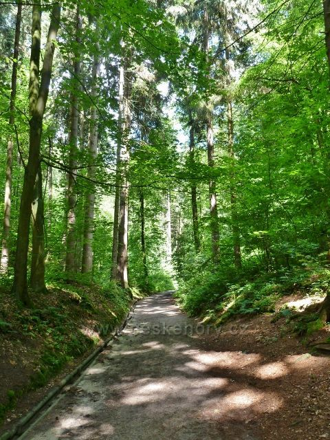 Cesta lesoparkem Debř