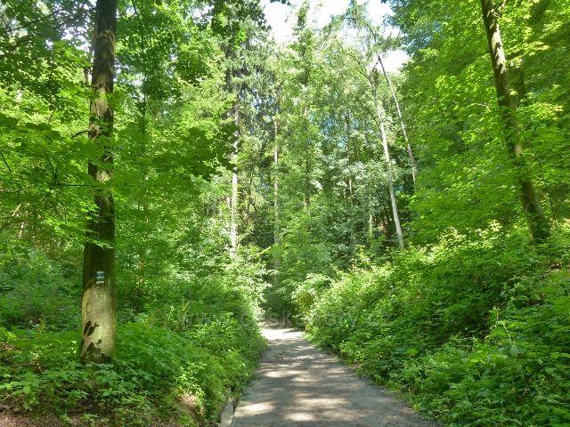 Středem lesoparku Debř vede modrá a zelená TZ