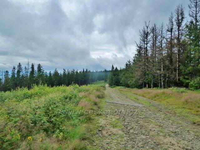 Nýdek - i kolem cesty na vrchol Velké Čantoryje je vidět kůrovcové ohnisko