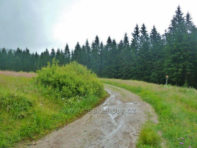 Visalaje - keř vrby slezské u cesty z Bílého kříže na Gruň