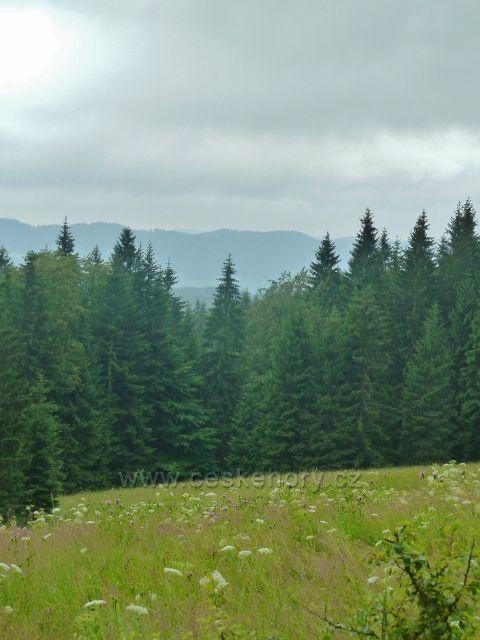 Visalaje - lesní louka pod cestou z Bílého Kříže na Gruň