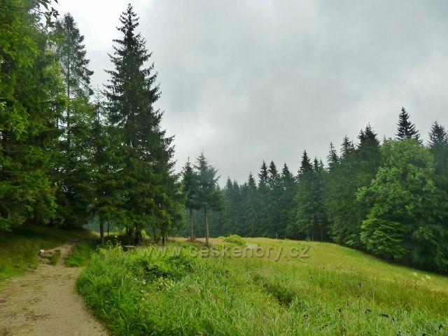 Visalaje - cesta na Gruň z Bílého kříže vede po horním okraji lesní louky