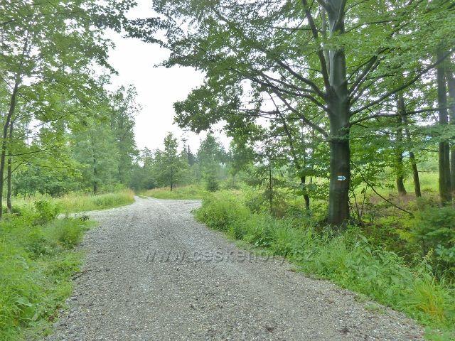 Kozinec - cesta po modré TZ Borkem k Malému Kozinci odbočuje vpravo