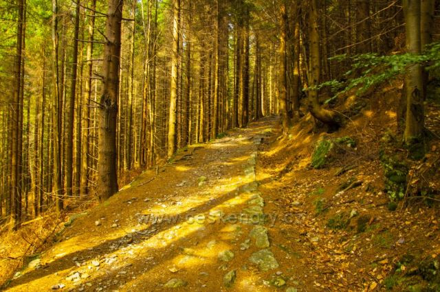 Cesta pod Tetrevima boudama