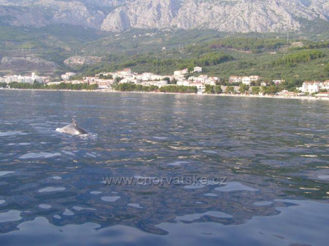 Půjčili jsme si motorový člun - setkání s delfínem  :-)  :-)
