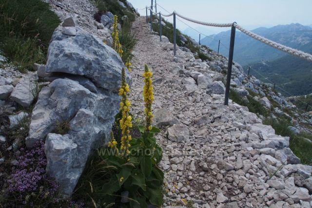 Divizna ve výšce 1700 m - Biokovo