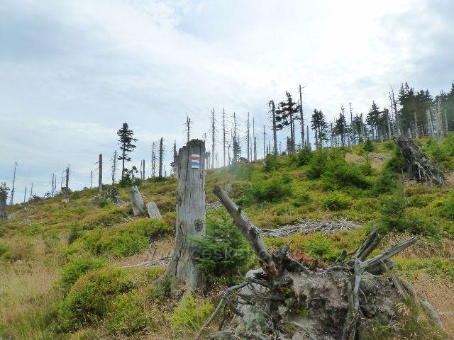 Králický Sněžník - turistická stezka jde po úbočí Stříbrnické