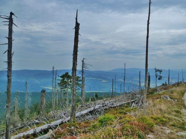 Králický Sněžník - pohled z úbočí Stříbrnické k Hanušovické vrchovině