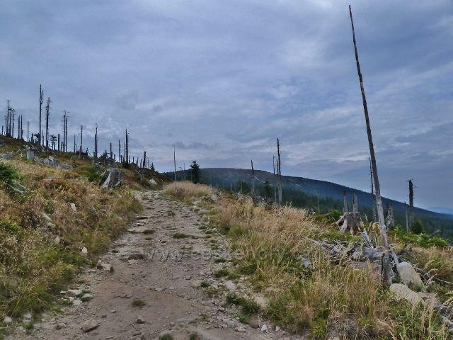 Králický Sněžník - turistická stezka po úbočí Stříbrnické, v pozadí Králický Sněžník