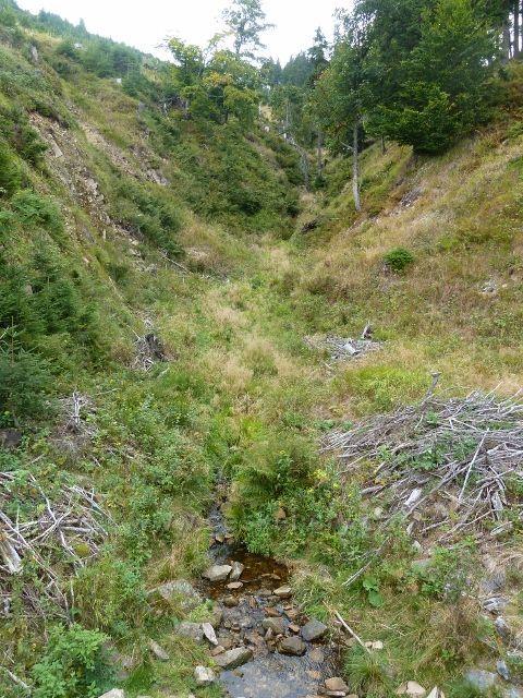 Králický Sněžník - Stříbrnický potok cca 300 m  pod svým pramenem