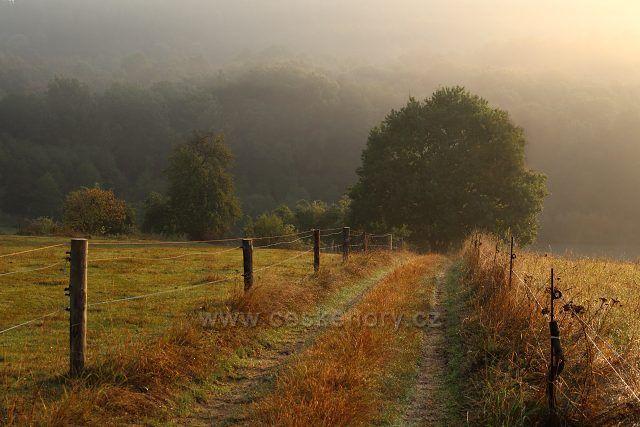 Cesta mezi pastvinami