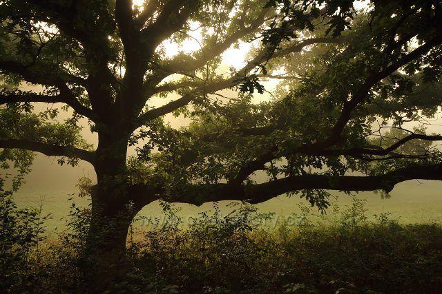 U památného dubu