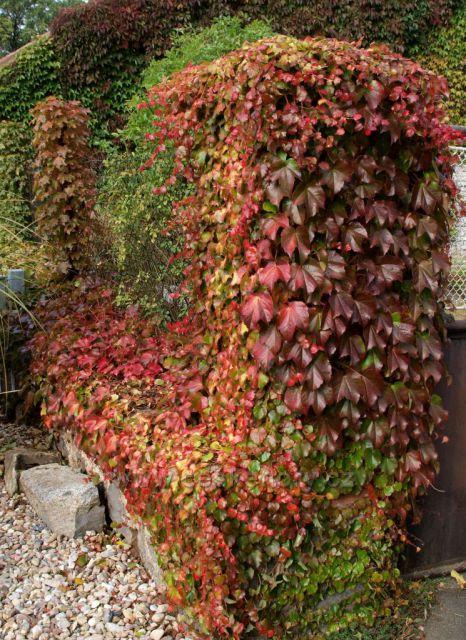 Podzimní kvadratura