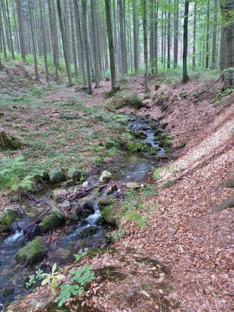 Horní Lipová - levostranný přítok Vápenného potoka pod lesním barem