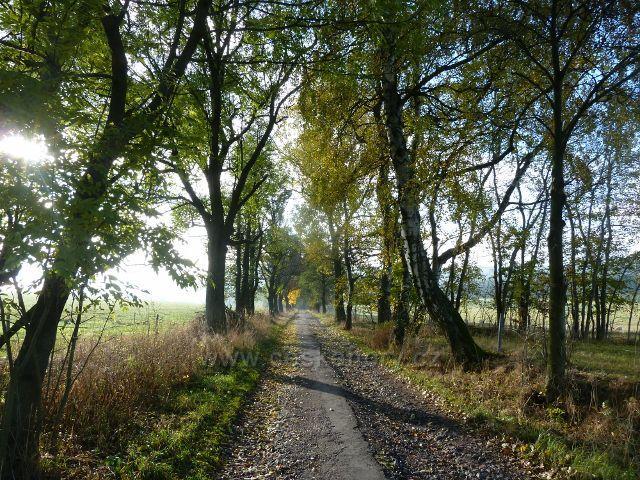 Lichkov - silnička k lesu,po níž vede JAK zelená TZ tak i cyklostezka k dělostřelecké tvrzi Bouda