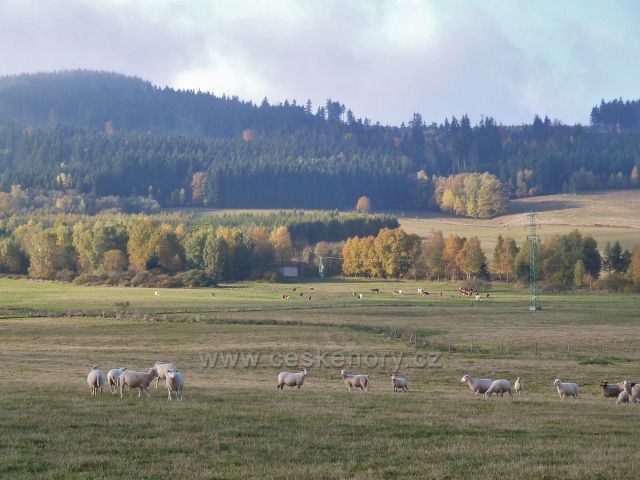 Lichkov - pastviny nad kozí farmou