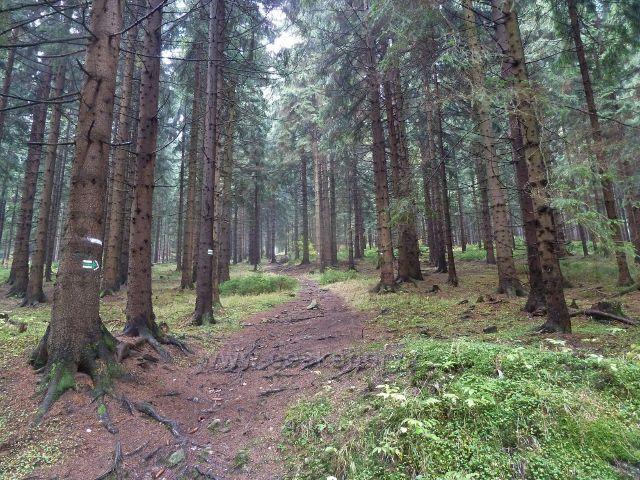 Lichkov - zelená TZ opouští pohodlnou cyklostezku a směřuje lesním porostem k pásmu bunkrů