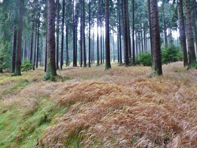 Lichkov - lesní bylinné patro nad cyklostezkou k Boudě